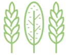 Back To The Future - AGROFORESTRY SYSTEMS - logo green